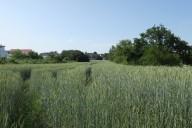 Mörfelden_Grün kann ein Park werden